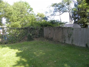 After Ivy Removed